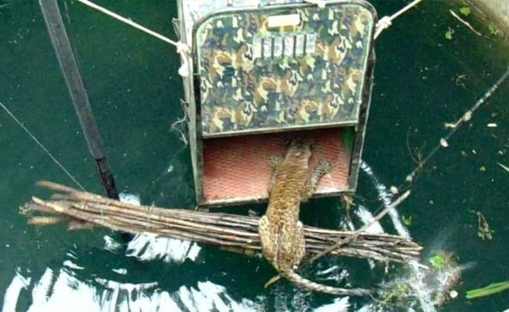 Leopard Rescued