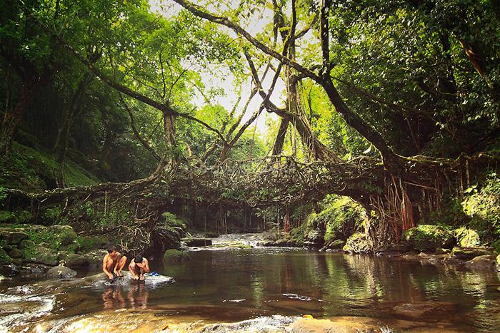 Living Root Bridges, Meghalaya
