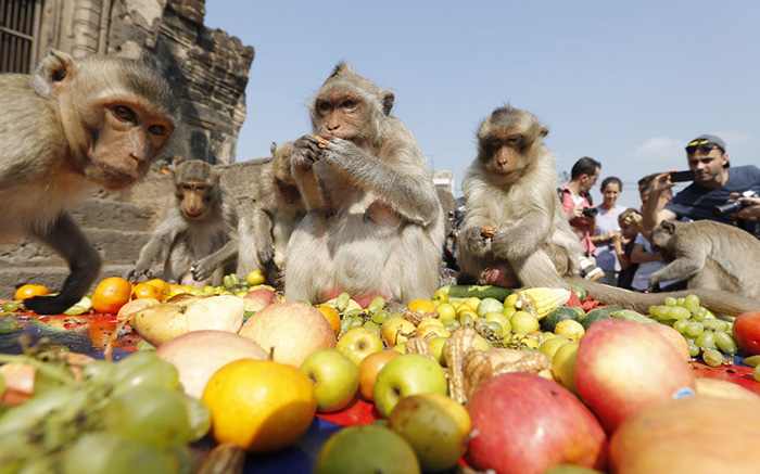 Monkey Buffet Thailand