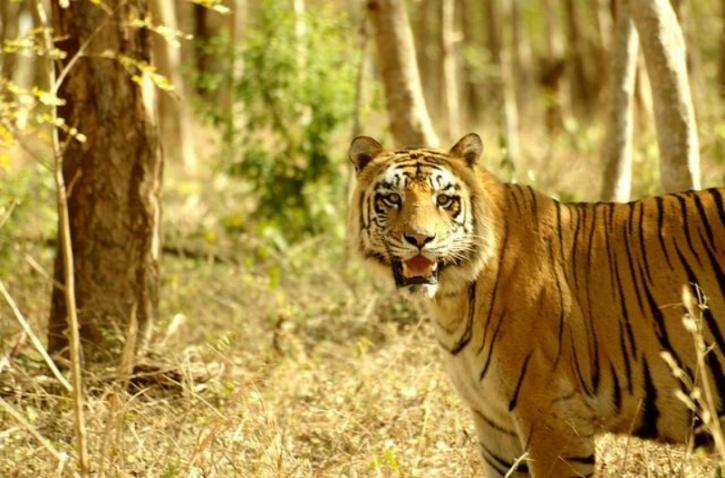 Tiger and Lion Safari near Shivamogga