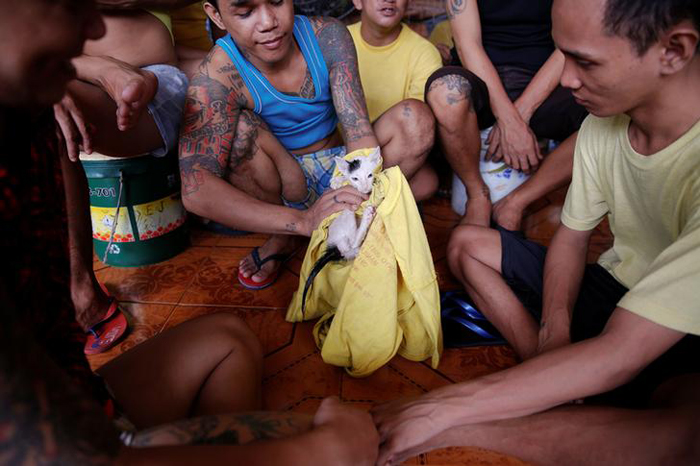 Inmates play with a cat at Quezon City Jail in Manila