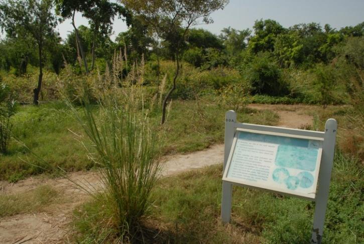 yamuna biodiversity