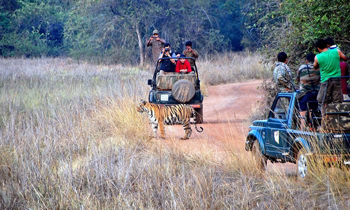 Tiger Reserve In Maharashtra