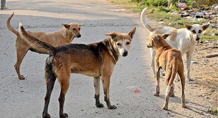 Nearly 2,800 Dogs Euthanised In Chennai In Four Years