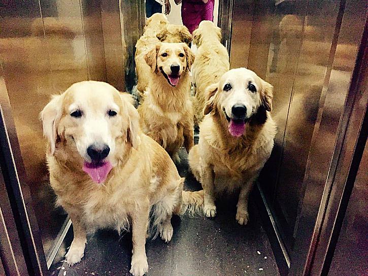 mumbai therapy dogs airport