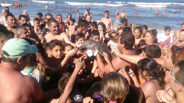 Baby dolphin killed in Argentina