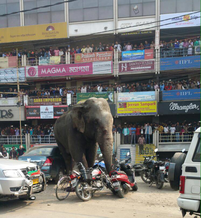 Elephant Creates Panic In Siliguri