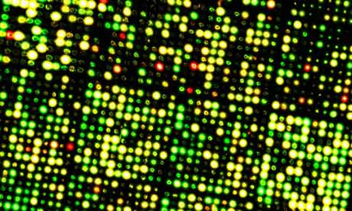 genome-structure