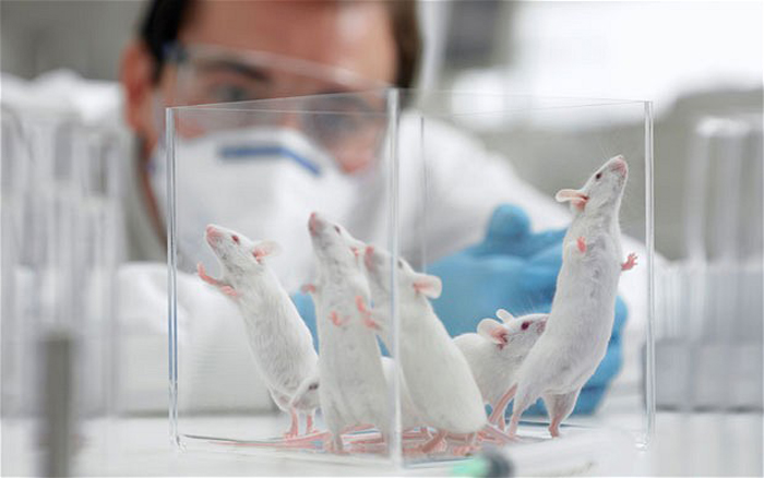 Elixir of youth tested successfully on mice