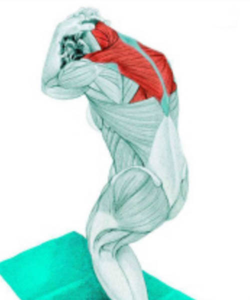 Stretch Muscles