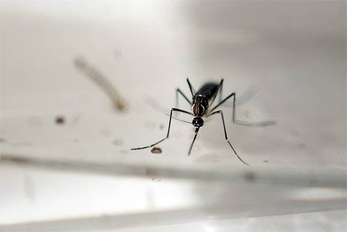 Colombia reports first Zika-linked deaths