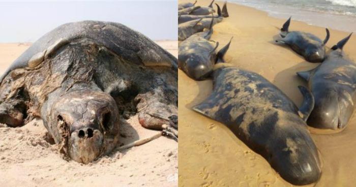 sea animals dying