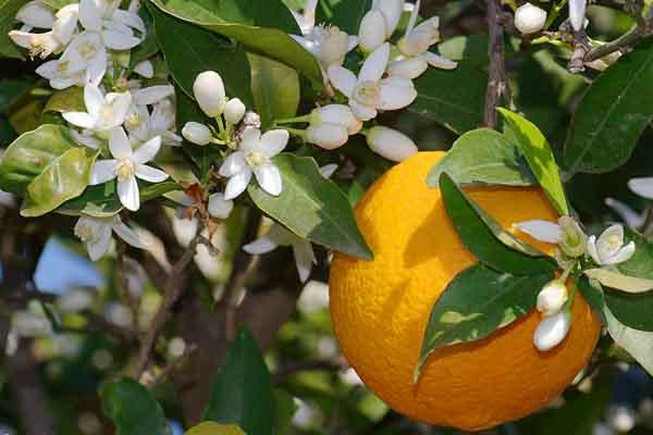 Edible Flowers Health Benefits