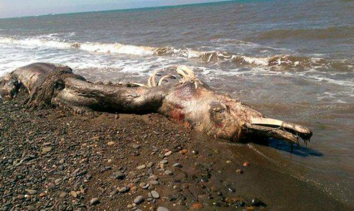 Whale cub washed ashore in Russia