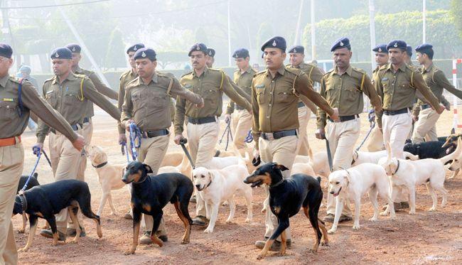 Dog squad