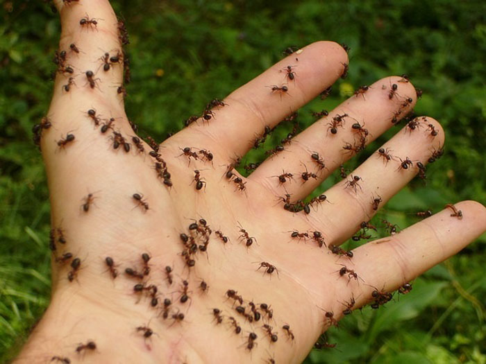 Big ants found living in 12-yr-old girl