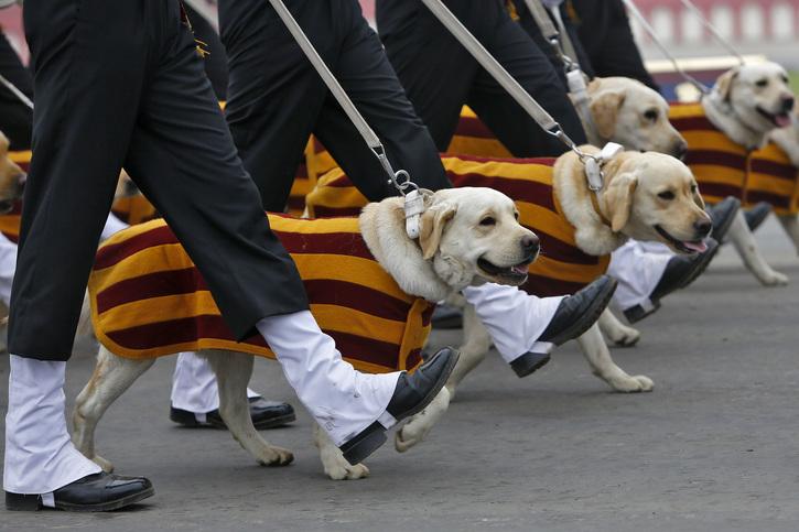 Army dog unit