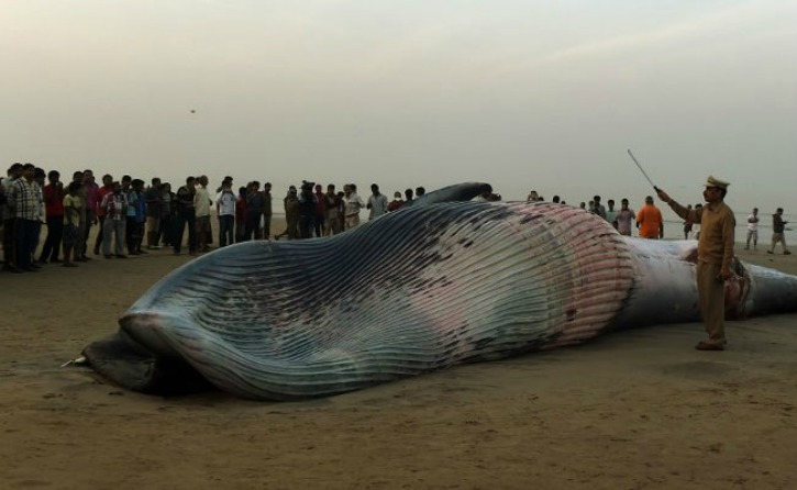 Whale Washes Ashore In Mumbai