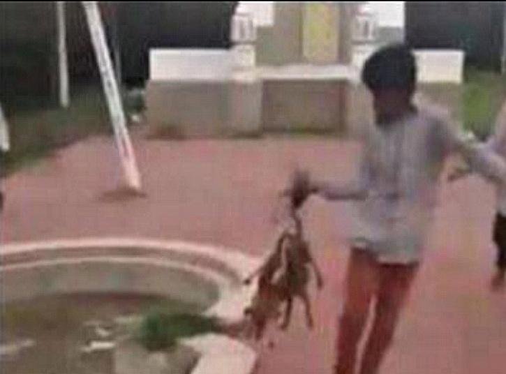 Hyderabad Puppies