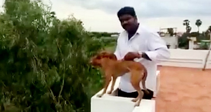 man throws dog off roof