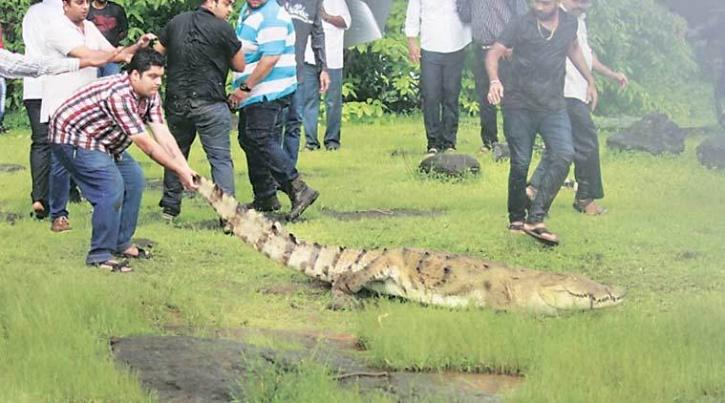 crocodile india 1