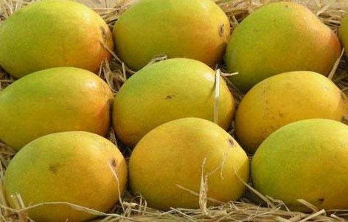 Rataul Mango