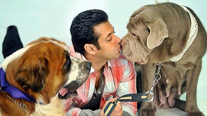 Salman khan dogs