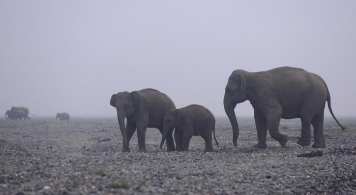 1 Year Sees 39 Elephants Die In Odisha