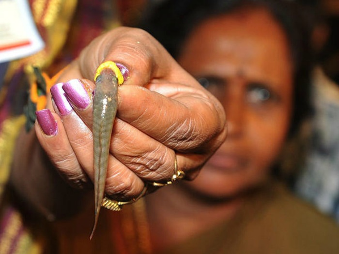 fish Prasadam