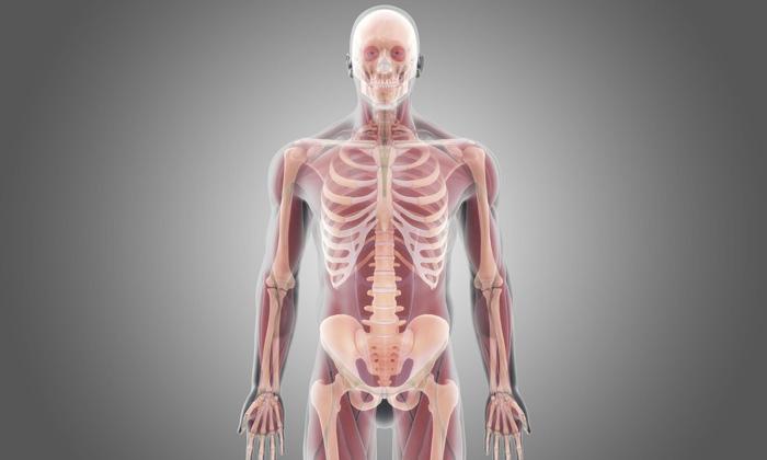 Full Body Transplants