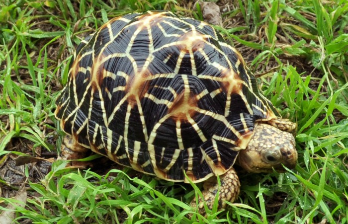 19 Year Old Uttarakhand Boy Tries To Sell Indian Roofed Turtles On Olx Gets Arrested