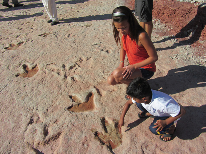 Footprints Of 150-Million-Year-Old Dinosaurs Found In Rajasthan