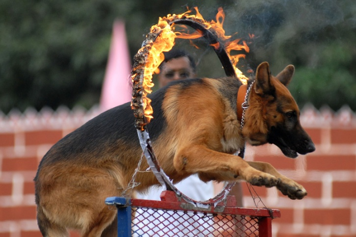 dogs security india