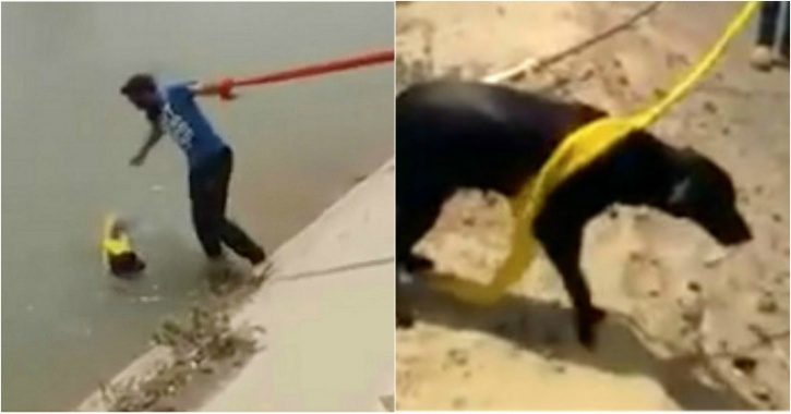 turban sikh dog rescue