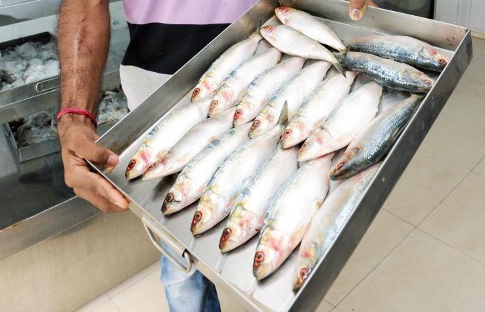 Modi Sardines