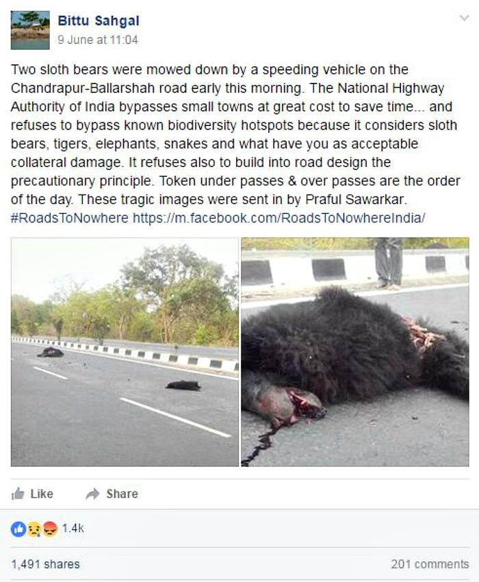 Sleuth bears