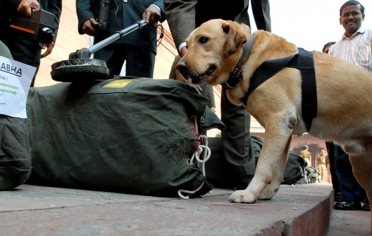 dogs security india 3