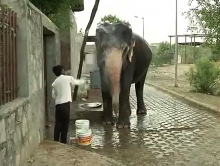 Elephants go thirsty after acute water crisis