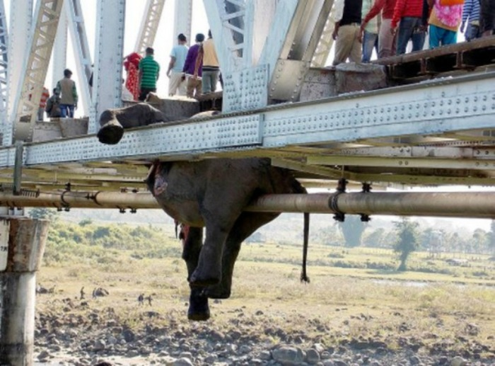 Elephants mowed by train in West Bengal