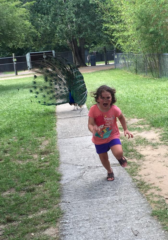 Girl fleeing a peacock