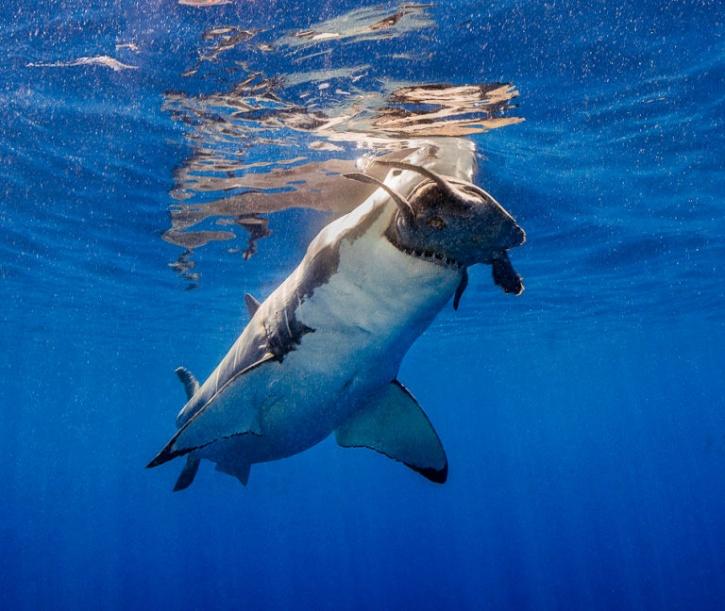 Underwater Photographer Awards