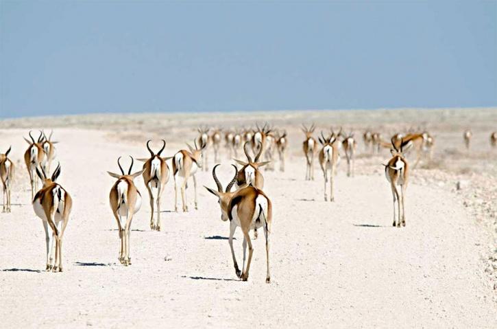 Springbok, Nambia