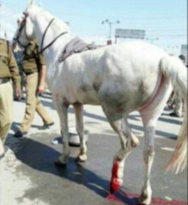 bjp horse
