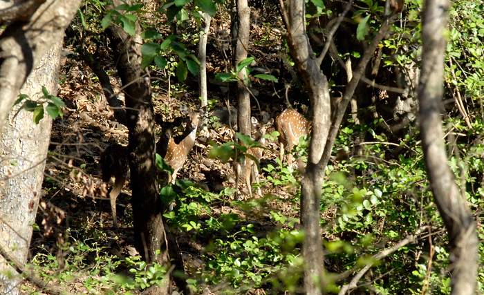 the Mumbai Metropolitan Region will lose 58 hectares of forest land to the Delhi-Mumbai Freight Corridor project
