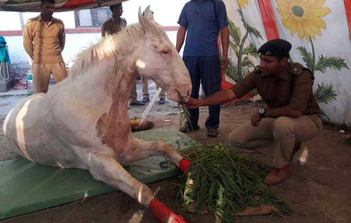 Shaktiman Can Now Stand On His Feet, Will Walk In Months!