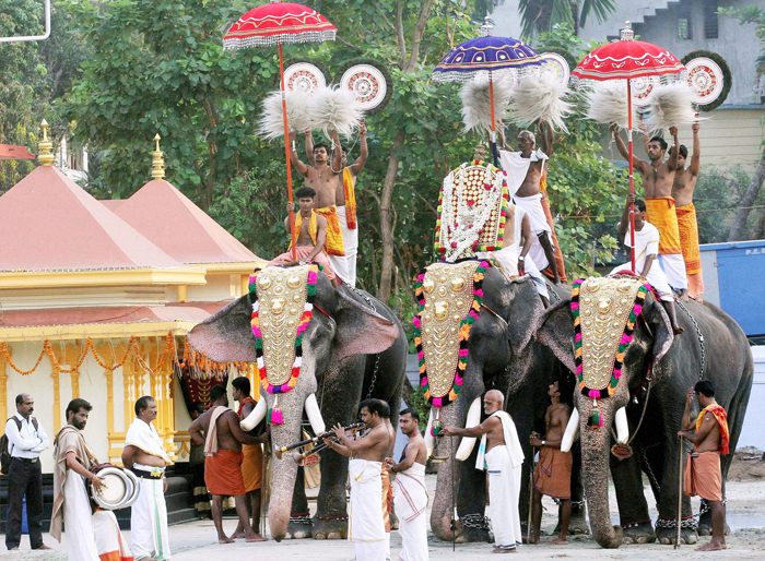 Kerala Govt Passes Ruling Allowing People To Own Elephants, PETA Lashes Out