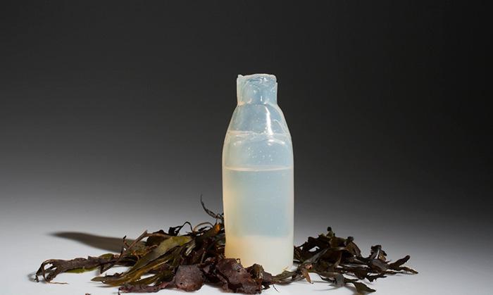 Algae water bottles