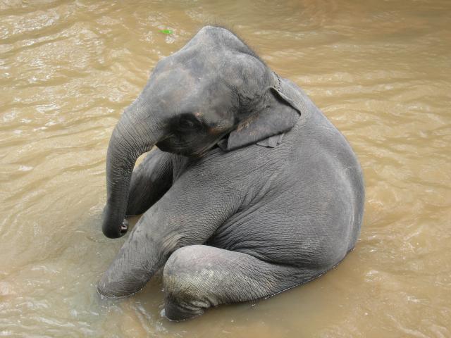 elephant sad