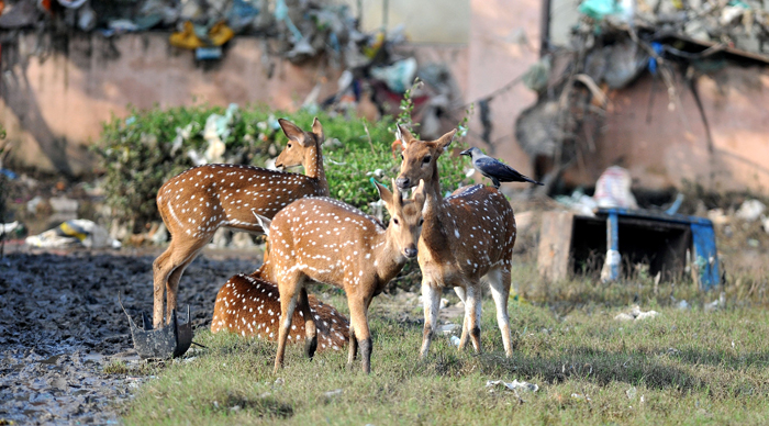 More Than 50 Animals Species In India Are Critically Endangered, 10 Of These May Soon Vanish!