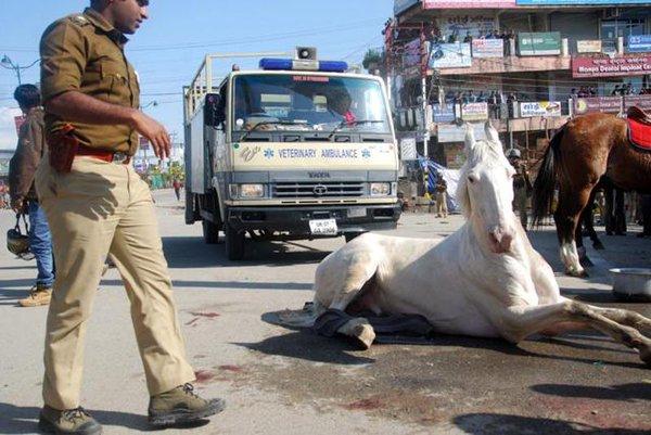 BJP horse attack